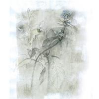 <p>Weeds - study #1<br />Pencil and pastel on paper<br />600mm x 420mm</p>