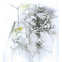 <p>Weeds - study #3<br />Pencil and pastel on paper<br />600mm x 420mm</p>
