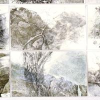 <p>The Rim (detail)<br />2014<br />pencil on collaged monoprints<br />91 x 55cm<br />a series of studies of flora in the caldera rim of northern NSW<br />awarded 2nd prize Border Art Prize, Tweed Regional Gallery&nbsp; 2014</p>