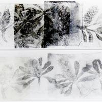 <p>banksia integrifolia - cycle (detail)<br />2014<br />73cm x 76cm framed<br />collaged of monotype prints of drypoint   drawings</p>