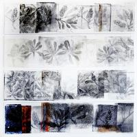 <p>banksia integrifolia - cycle<br />2014<br />73cm x 76cm framed<br />collaged of monotype prints of drypoint   drawings</p>