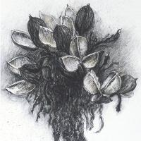 <p>gymea lily seed heads (detail)<br />2015<br />115cm x 75cm<br />charcoal and pastel on paper</p>